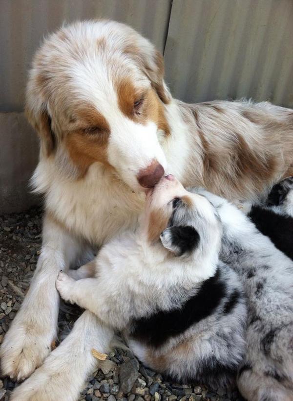 Anya kutya és picijük15