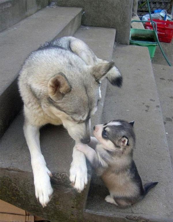 Anya kutya és picijük17