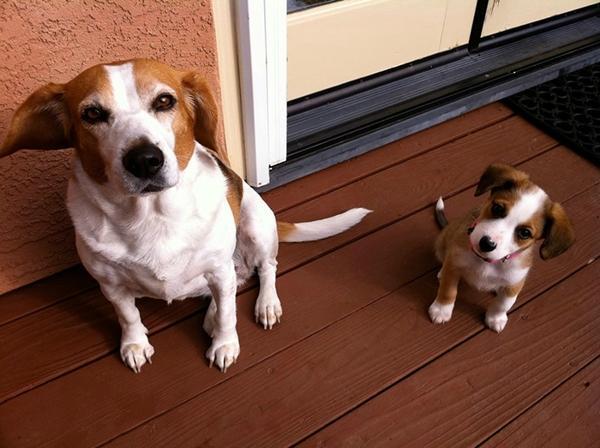 Anya kutya és picijük21