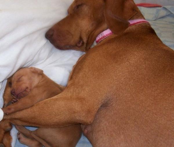 Anya kutya és picijük22