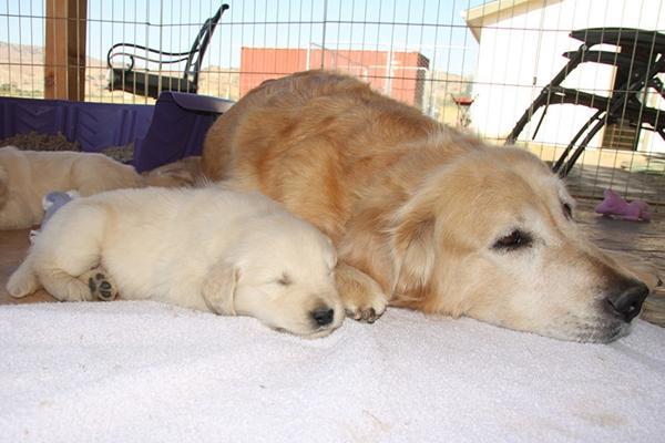 Anya kutya és picijük23