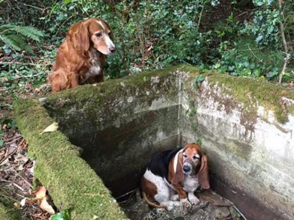 Egy hétig őrizte csapdába esett barátját a hős kutyus1