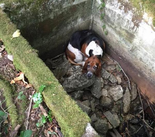 Egy hétig őrizte csapdába esett barátját a hős kutyus2