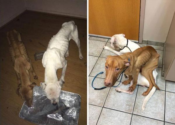 Két elhagyott és éhező kutya felépülése2