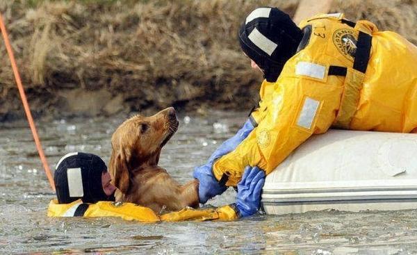 Megmentett kutyusok 1