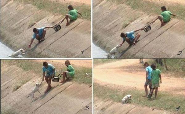 Megmentett kutyusok 10