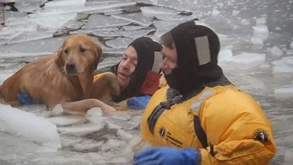 Megmentett kutyusok 2