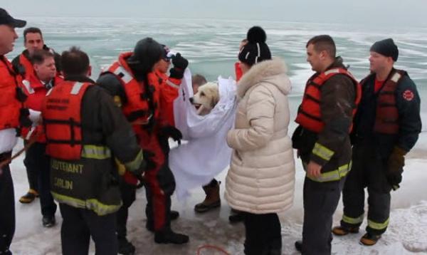 Megmentett kutyusok 3