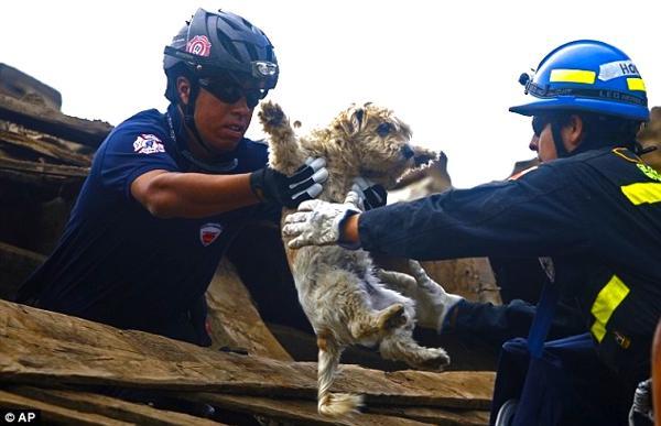 Megmentett kutyusok 4