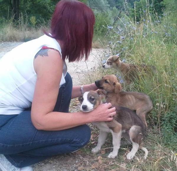 Megmentett kutyusok 5