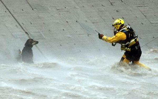 Megmentett kutyusok 6
