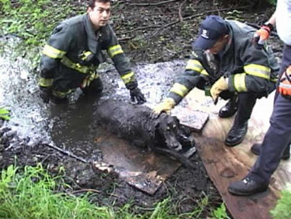 Megmentett kutyusok 7