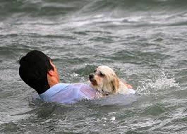Megmentett kutyusok 8