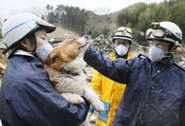 Megmentett kutyusok 9