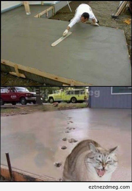 Troll macska